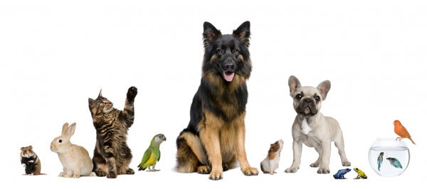 pet care, pet sitting, in home care, pappy care, dog walking